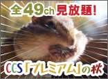 11/5~30 プレミアムコースおためし